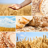 Collage wheat. Collage of wheat and bread royalty free stock image