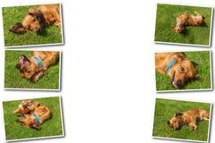 Collage on white background mixed spaniel dogs spaniel royalty free stock photos
