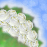 Collage of white roses. On a blue background Stock Images