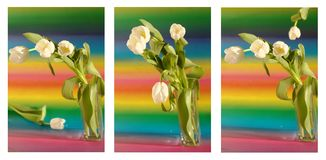 Collage with white tulips in vase Royalty Free Stock Photography