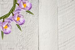 Collage of white violet beautiful crocus flowers on a gray wooden background with empty copy space stock photos
