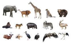 A collage of wild animals Royalty Free Stock Photography
