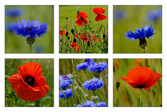 Collage of wild flowers Stock Photos