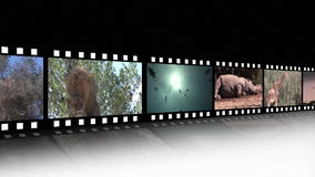 Collage of Wildlife footage Royalty Free Stock Images