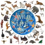 Collage of wildlife walking around the world stock photo