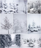 Collage of winter trees Royalty Free Stock Images