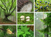 Collage - In the woods Royalty Free Stock Photo