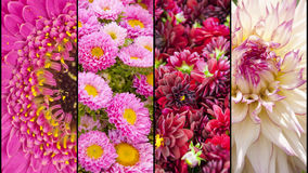 Collage of yellow and pink flower sections Royalty Free Stock Image