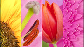 Collage of yellow and pink flowers Stock Photography