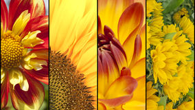Collage of yellow and red flowers Royalty Free Stock Photo