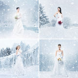 Collage of young brides on a winter background. Set collection. Royalty Free Stock Images