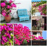 Collagebild av olika rosa blommor av Cypern royaltyfria foton