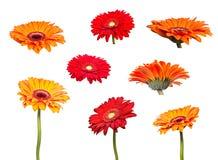 Collageblommor av den orange gerberaen royaltyfria bilder