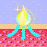 Collageenbescherming, serum, daling die cel beter maakt anatomie, vectorillustratie royalty-vrije illustratie