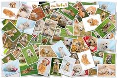 collagehund arkivbilder