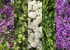 Collagemengeling van kruiden en bloemen photoes Royalty-vrije Stock Fotografie