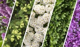 Collagemengeling van kruiden en bloemen photoes Royalty-vrije Stock Foto's