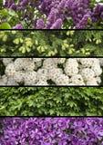 Collagemengeling van kruiden en bloemen photoes Royalty-vrije Stock Foto