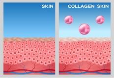 Collagen turn a skin to white , white collagen. Blue background Stock Photo
