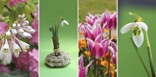 Collagenfrühjahrblumen in den grünen Abstufungen und im Rosa Stockfoto
