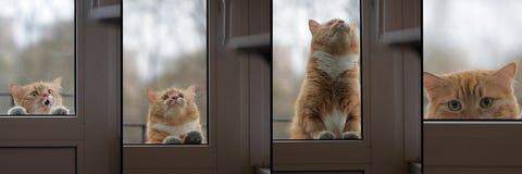 Collagenporträtkatze möchte kommen Haus, trauriger Augenblick Lizenzfreies Stockfoto