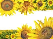 Collagenpostkarte mit Sonnenblumen lizenzfreie stockbilder