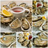 Collageof  platter of fresh organic raw oysters on ice. Collage of platter of fresh organic raw oysters on ice at restaurant Royalty Free Stock Photography