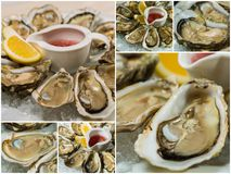 Collageof  platter of fresh organic raw oysters on ice. Collage of platter of fresh organic raw oysters on ice at restaurant Royalty Free Stock Images