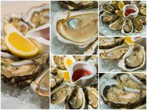 Collageof  platter of fresh organic raw oysters on ice Stock Photography