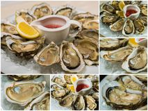 Collageof  platter of fresh organic raw oysters on ice. Collage of platter of fresh organic raw oysters on ice at restaurant Royalty Free Stock Photos