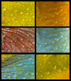 collageraindrops royaltyfria foton