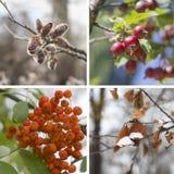 Collagevår, sommar, nedgång, vinter Fotografering för Bildbyråer