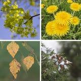 Collagevår, sommar, nedgång, vinter Royaltyfria Bilder