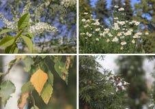 Collagevår, sommar, nedgång, vinter Arkivfoton