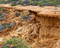 Collapsed cliff in Torrey Pines State Park Stock Photography