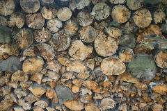 Collapsed and folded trees. Texture of a wood.Collapsed and folded trees Royalty Free Stock Images