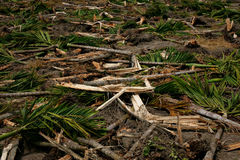 Collapsed trees. Background of the collapsed trees Stock Photography