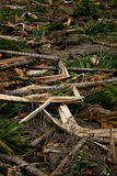 Collapsed trees. Background of the collapsed trees Stock Image