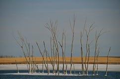 Freezing Water Creates Island of Trees Stock Image