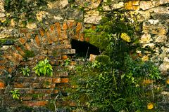 The collapsing stone arch is laid with bricks to protect against the destruction of the building. Green shoots make their way through the stone Royalty Free Stock Photo