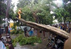 Collapssed träd Arkivbilder