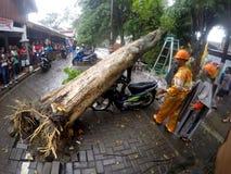 Collapssed träd Royaltyfria Bilder