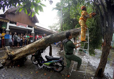 Collapssed träd Royaltyfri Bild