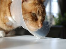 Collar del gato Foto de archivo libre de regalías
