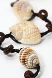 Collar del shell Fotos de archivo