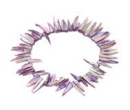 Collar del shell Foto de archivo libre de regalías
