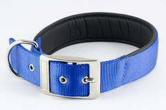 Collar for dog. On a white background Stock Photos