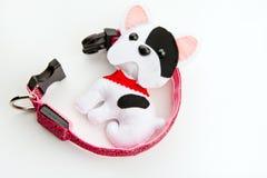 Collar dog rhinestones studio quality. Light Stock Photos