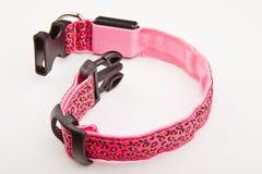 Collar dog rhinestones studio quality. Light Royalty Free Stock Photos