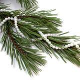 Collar en árbol de abeto. Foto de archivo libre de regalías